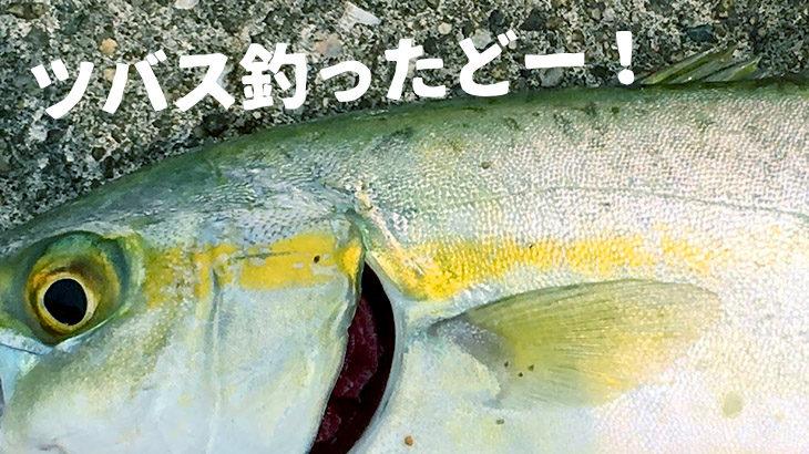 須磨でキス釣りをしてみたら…ツバスが釣れた!の巻
