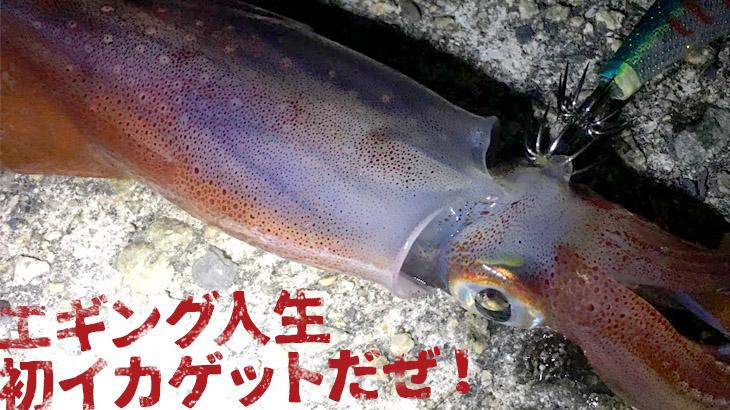 エギングデビューから2回目の釣行で人生初イカゲット!ところがこれは…